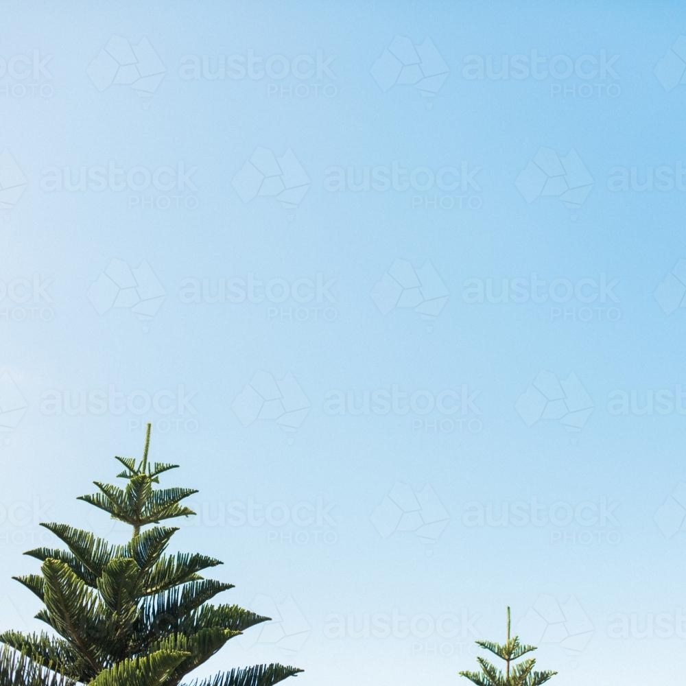 Trees and a blue sky - Australian Stock Image