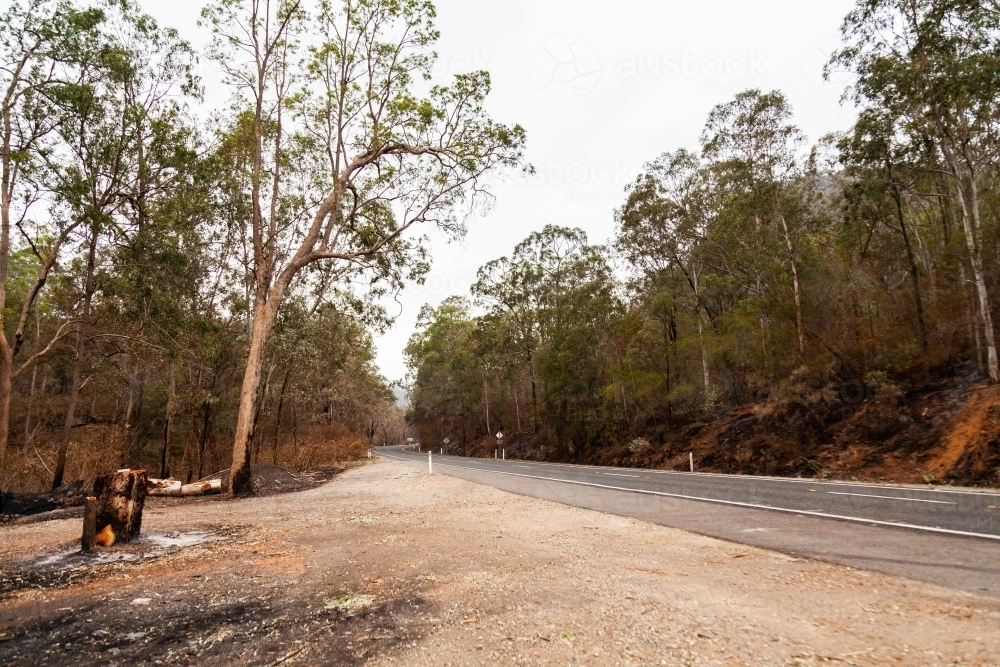 Trees burnt brown and black beside Putty road after bushfire - Australian Stock Image