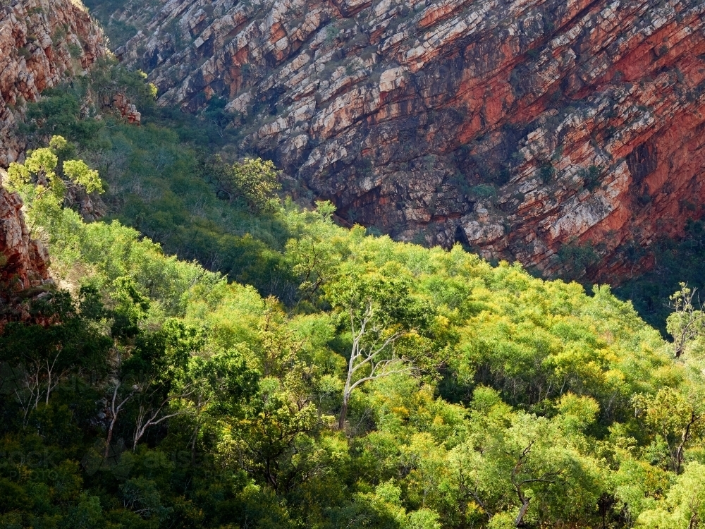 Trees in Front of a Red Cliff Face on Talbot Bay - Australian Stock Image