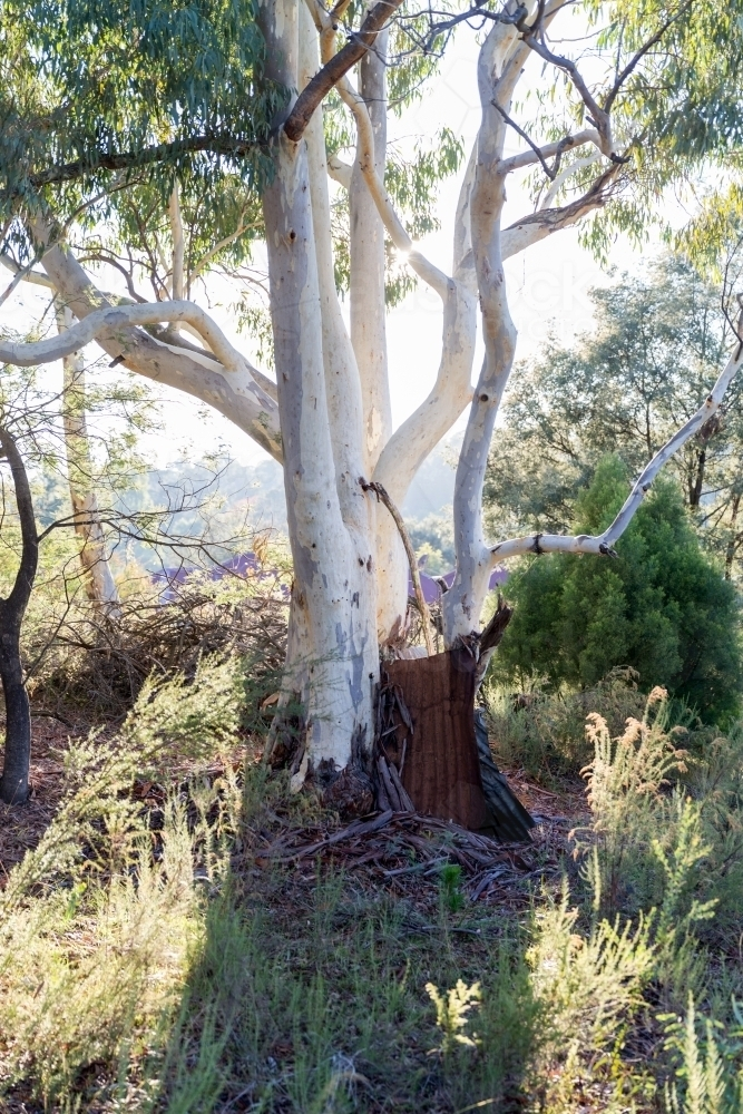 Trees of Hillend - Australian Stock Image