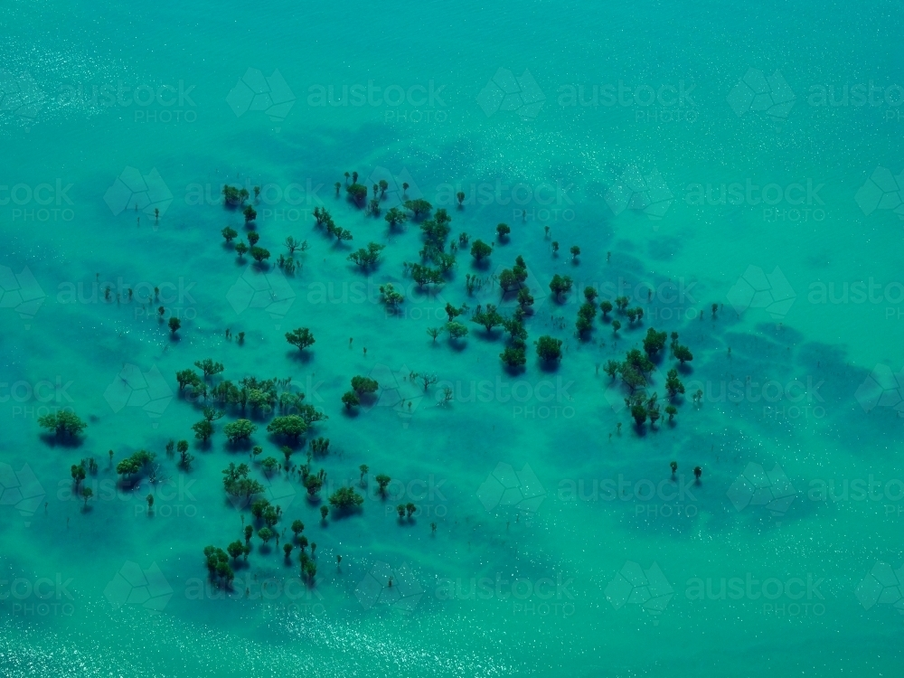 Trees Submerged in High Tide Water in Buccaneer Archipelago - Australian Stock Image