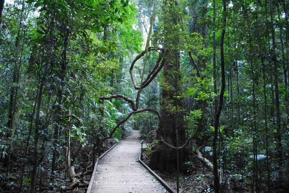 Walkway through the rainforest at the Mary Cairncross Scenic Reserve - Australian Stock Image