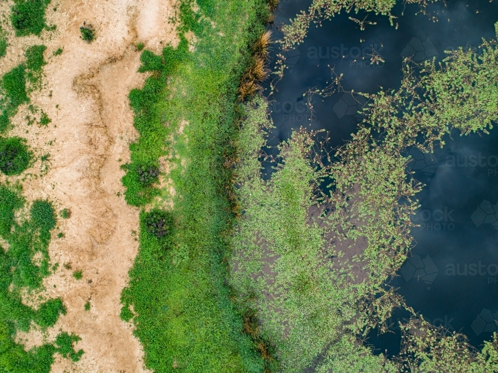 Watercourse and dam with green water weed and grass growing - Australian Stock Image
