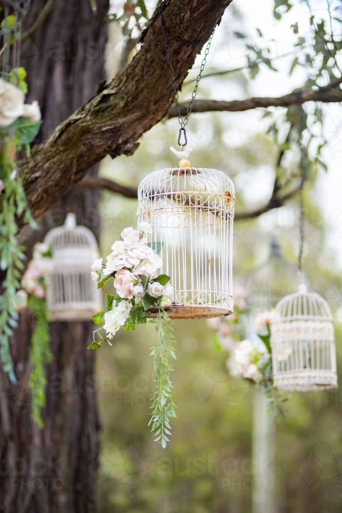 White bird cages hanging from tree outside as decoration at a wedding - Australian Stock Image