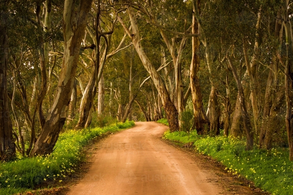Winding dirt road in Clare Valley bordered by trees and grass - Australian Stock Image
