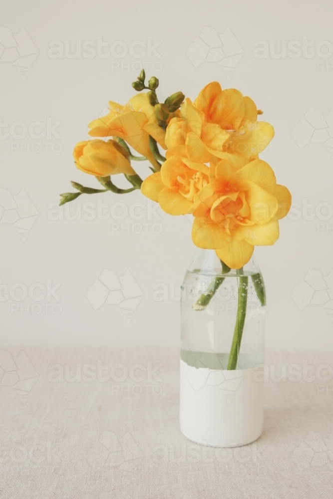 Yellow freesia flowers in a vase - Australian Stock Image