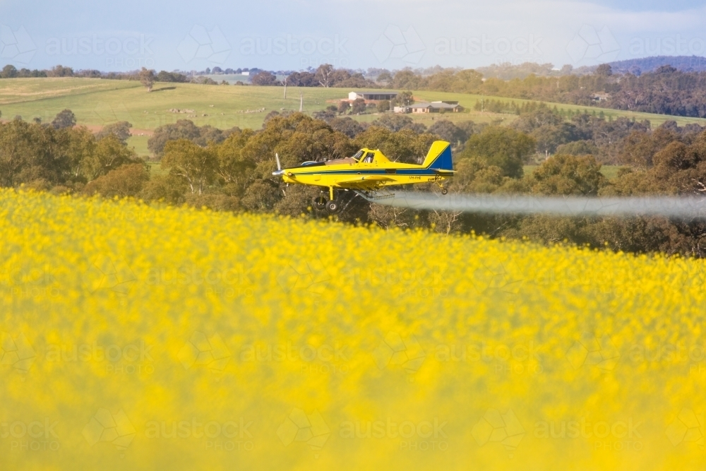 yellow plane used for crop dusting (spraying pesticides on) paddocks or fighting bush fires - Australian Stock Image