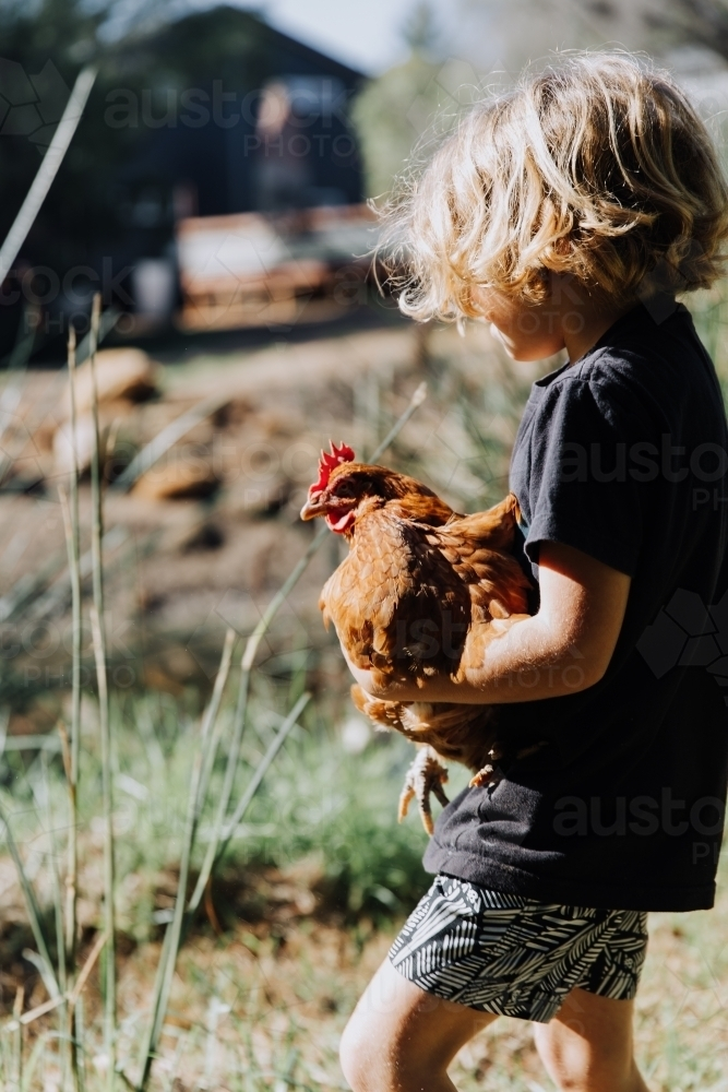 Young boy holding chicken - Australian Stock Image