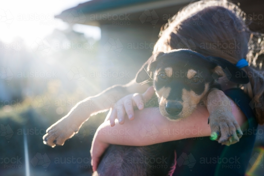 Image Of Young Girl Holding A Black And Tan Kelpie Puppy In The Sunshine Austockphoto