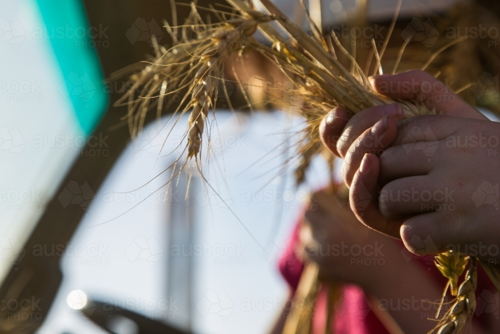 Young girl holding stalks of wheat - Australian Stock Image
