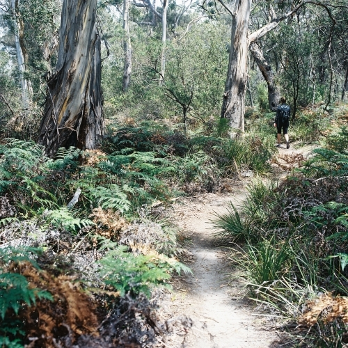 Trail into the Bush Land