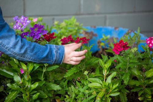 Child's hand picking brightly coloured flowers