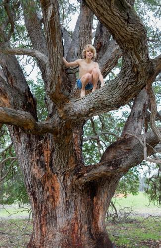 Shirtless young kid climbing up in a gum tree