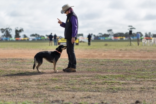 Sheepdog trainer with kelpie dog at ag show