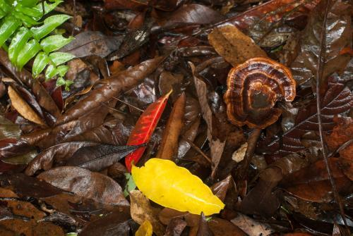 Detail shot of wet forest floor with yellow, red and brown leaves, green fern frond and brown fungi