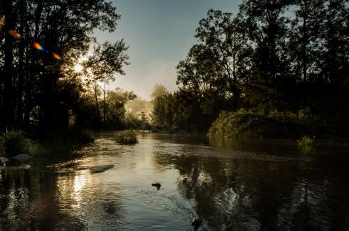 Misty creek scene at dawn