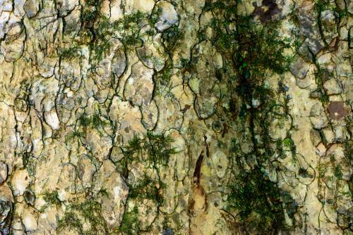 Close up of rough patterned bark with green moss
