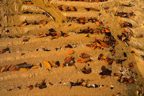 Horizontal ripples of beach sand with brown and orange leaf litter