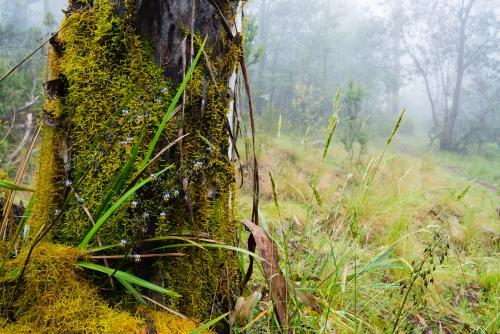 Close up view of  wildflowers, moss and grasses on tree trunk in misty forest