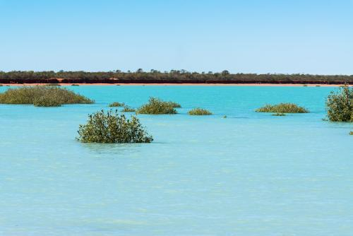 Turquoise water almost covers mangroves in Roebuck Bay