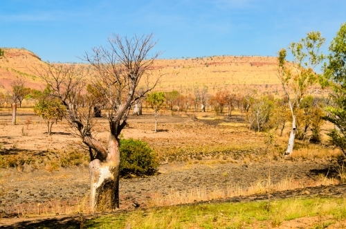 Boab trees in a colourful burnt landscape