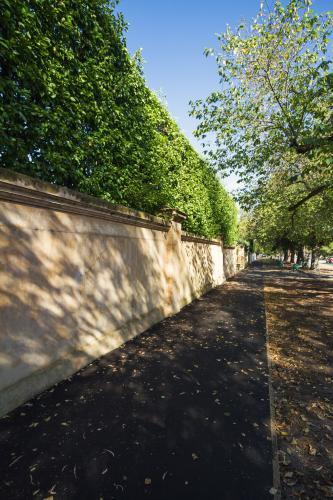 Large rendered front fence with green hedge in luxury Melbourne suburb