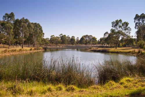 Suburban lake with native grasses in foreground and gum trees in background