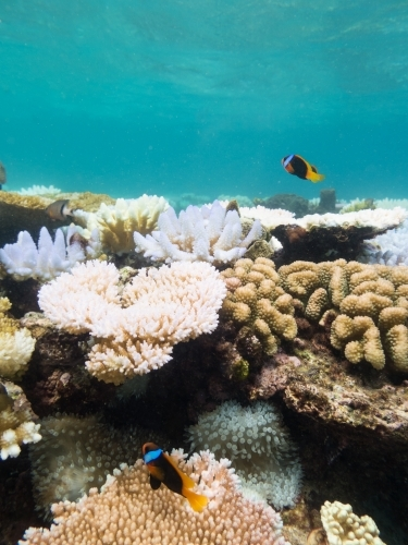 Colourful fish and coral on the Great Barrier Reef
