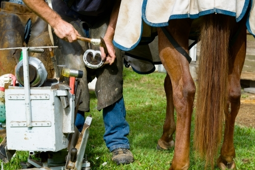 Farrier with tool box shoeing a horse