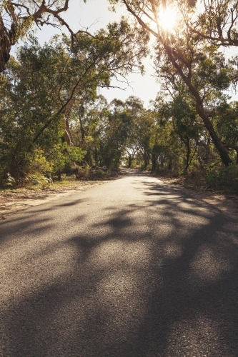 Walking down a country road in the Victorian bush
