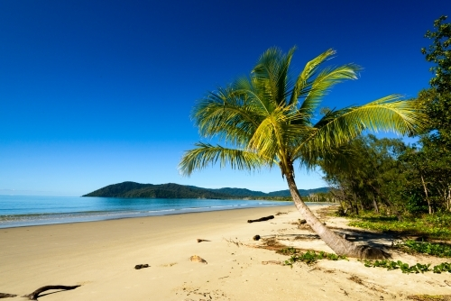 Idyllic tropical beach with palm tree, sand, blue sky and blue sea