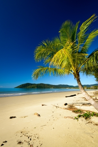 Beautiful, tranquil, tropical beach scene with palm tree and dark blue sky