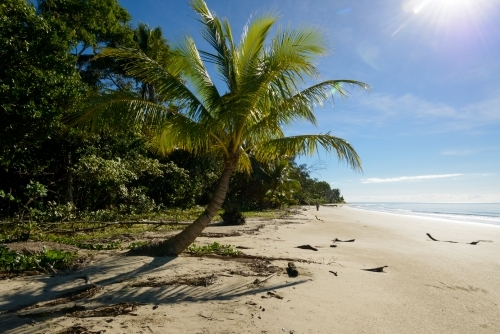 Beautiful tropical beach scene with palm tree, blue sky and lens flare