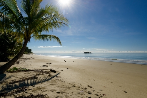 Beautiful sunny, tropical beach scene with palm tree, an island in the distance