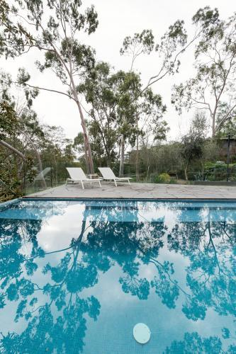 Oasis of an Australian home backyard swimming pool surrounded by native gum trees