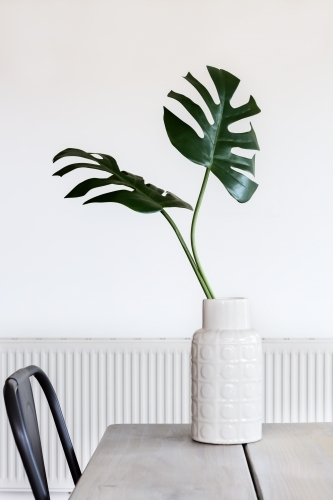 Minimalist white room and vase with Monstera palm leaves