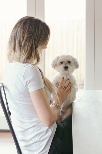 Gorgeous little white dog on the lap of a girl sitting at the table