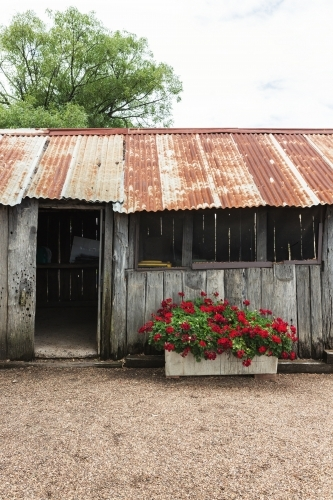 Old rusty tin roof shed in the country