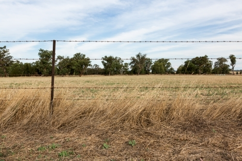 Background of barbed wire fence and farm paddock