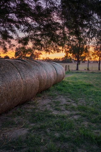 Rolls of hay at sunrise with golden yellow horizon