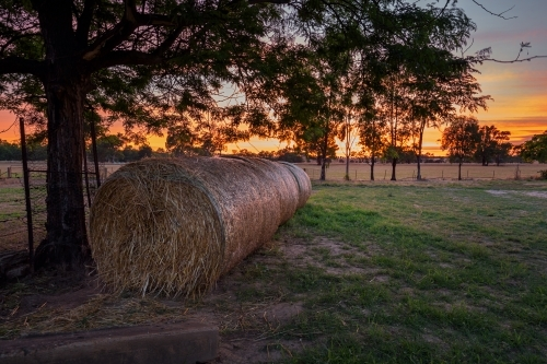 Golden yellow sunrise behind rolls of straw on a farm