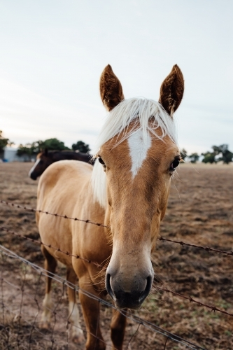 Close up of a beautiful young horse in a paddock
