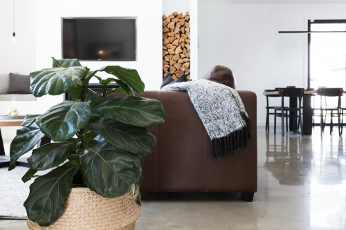Indoor plant in contemporary living room horizontal