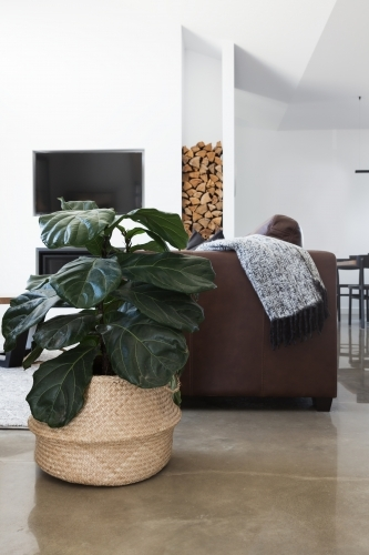 Indoor plant in contemporary living room vertical
