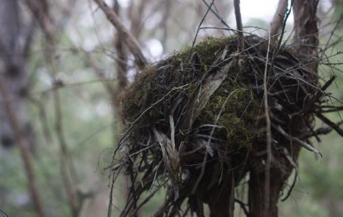 A bird's nest close up with low lighting