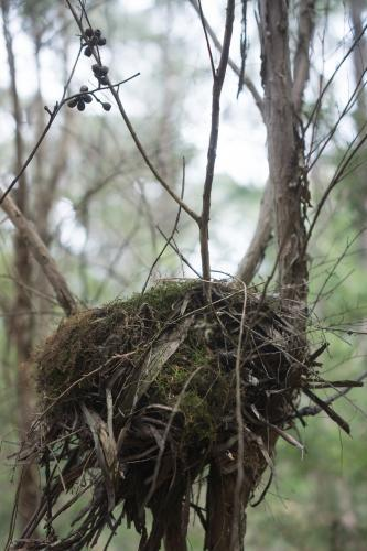 A bird's nest up close in portrait