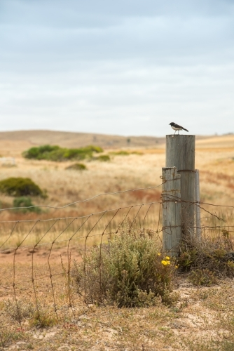 A bird sitting on a fence post