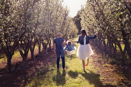 A Boy And Girl Swinging Their Little Sister Away From the Camera In An Orchard