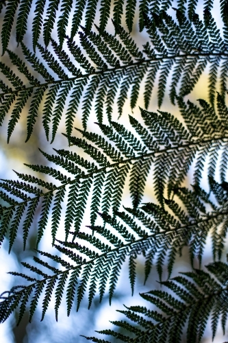 A close up of a fern frond in soft dappled light