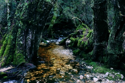 A creek running through mossy trees